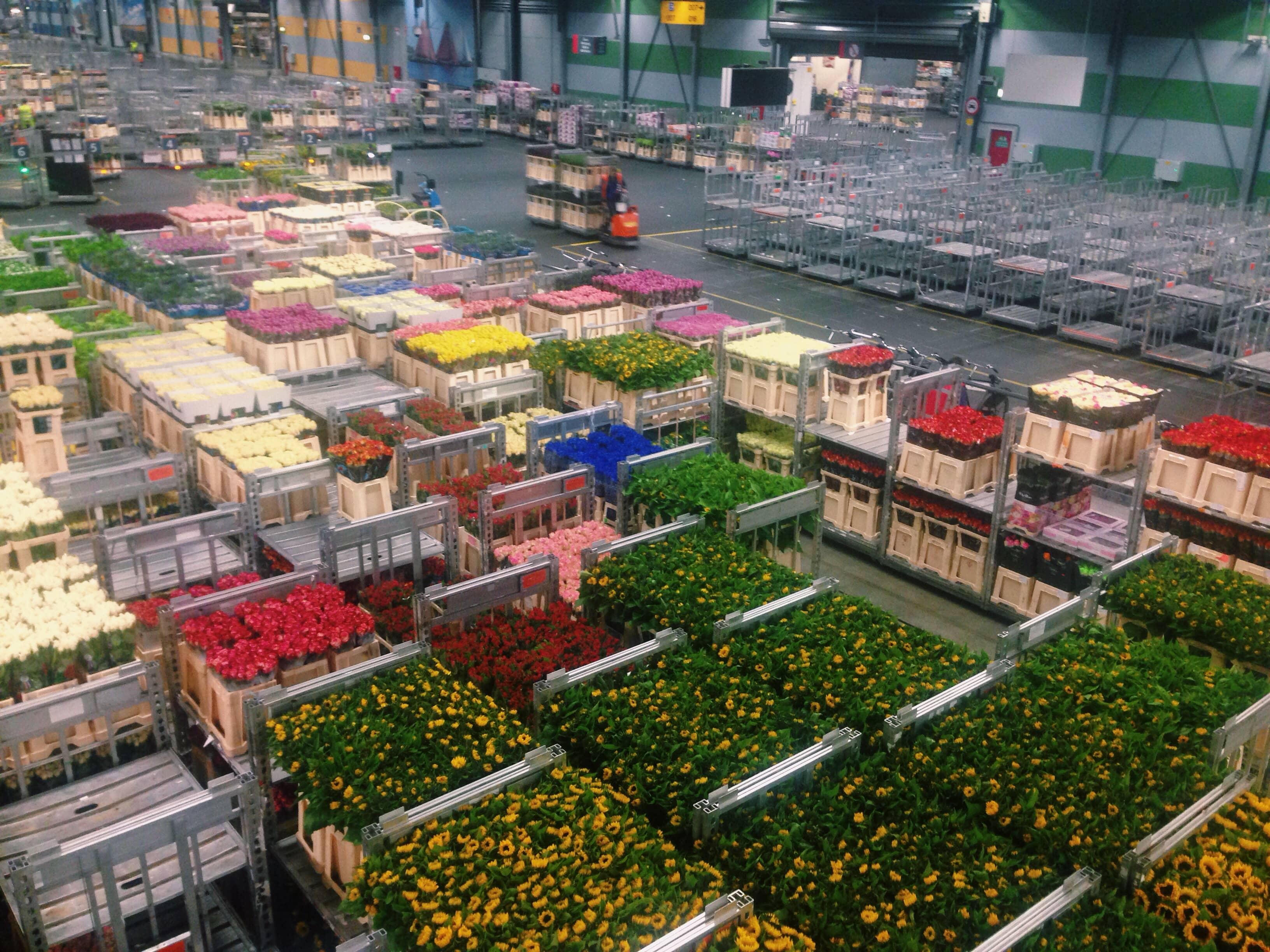 Holland's Top Rankd Logistics Sector Flora Holland