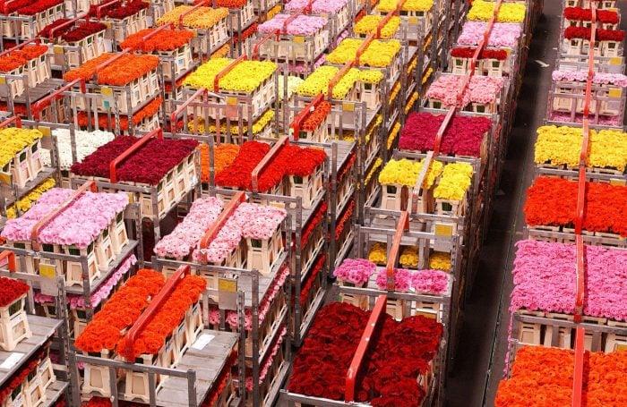 Dutch Flowers Fuel Valentine's Day