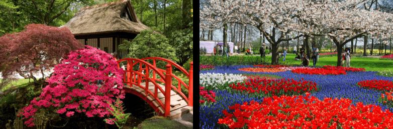 Japan Netherlands