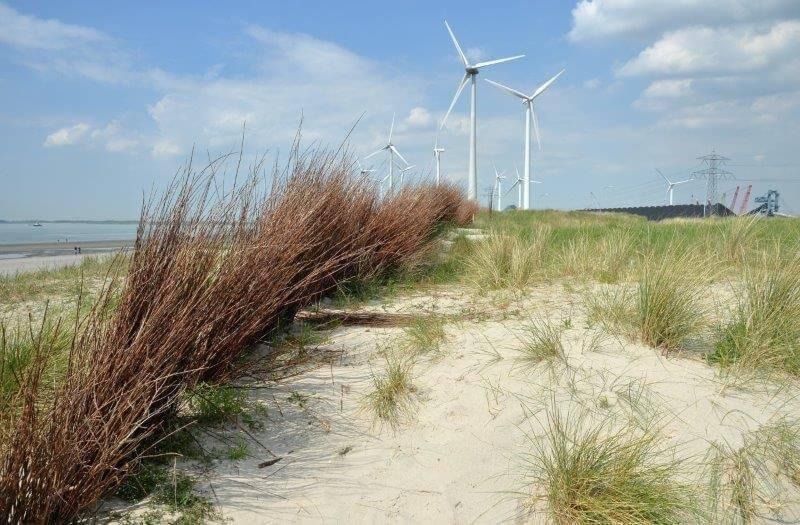 Wind turbines on the coast of Zeeland