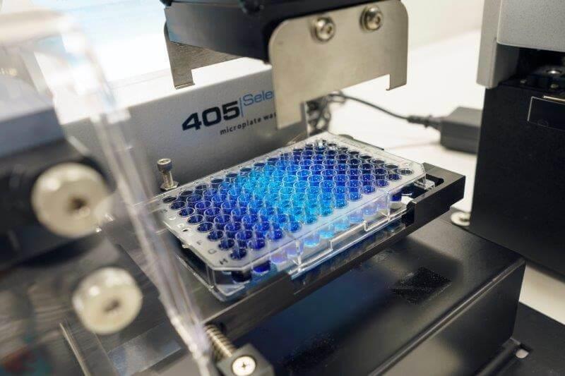 Vaxxinova innovates strategies for Animal Health in the Netherlands