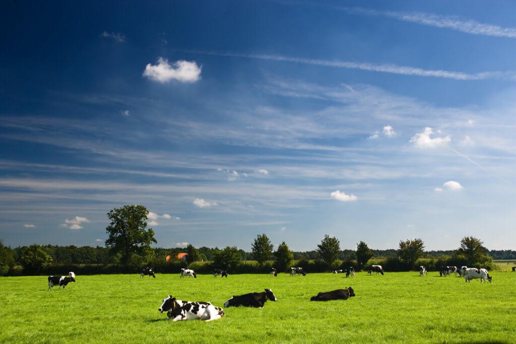 Netherlands agriculture