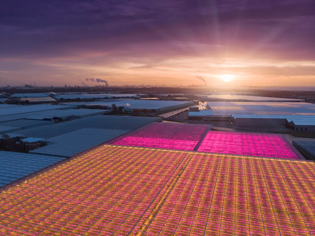 The Netherlands agriculture