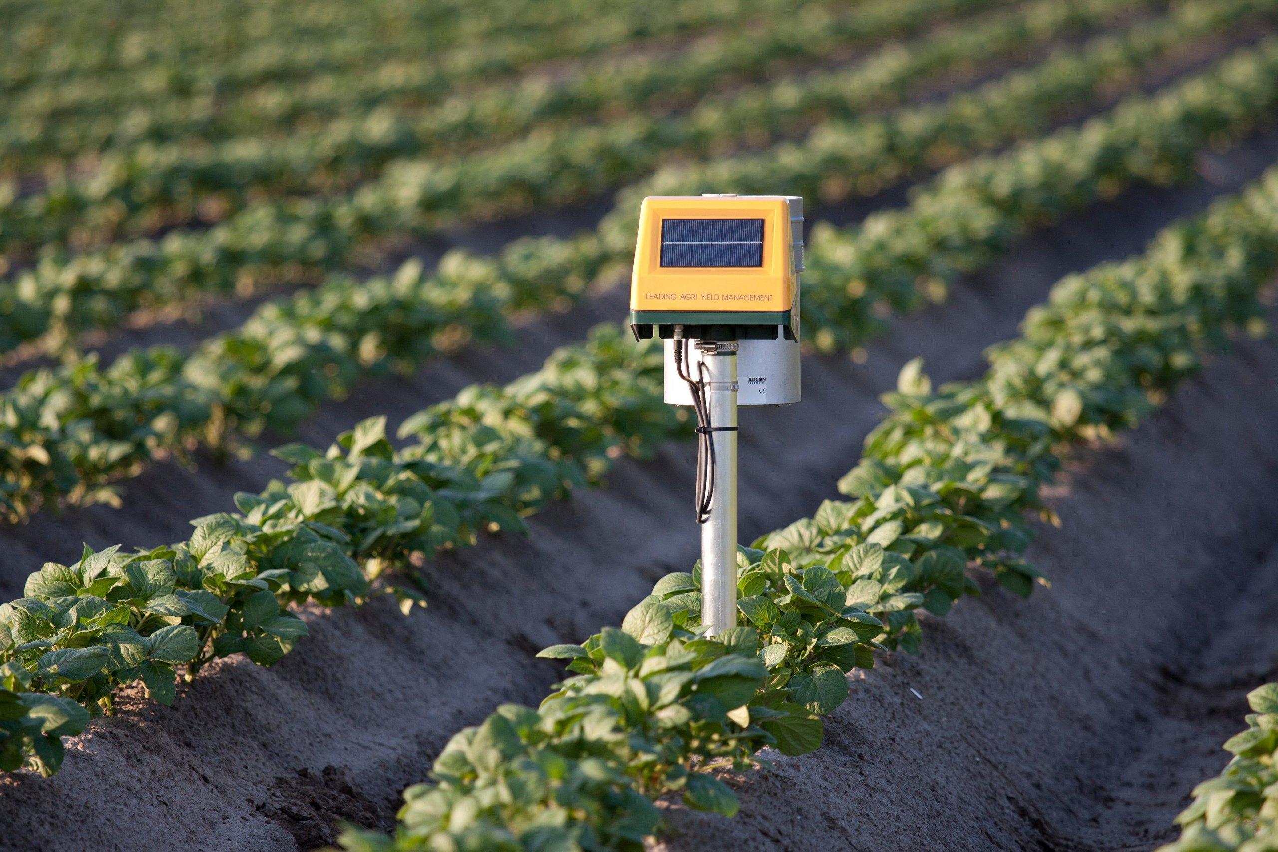 soil sensor in potato crop