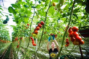World Economic Forum and the Netherlands launch Food Innovation Hubs initiative at Davos Agenda 2021