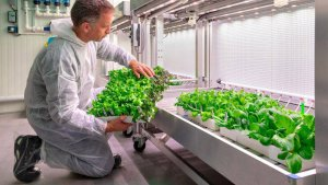 BASF vegetable seed business and Maastricht University collaborate in Brightlands Future Farming Institute